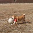 ボール大好き